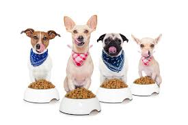 top 20 low protein dog food reviews and buying guide 2017 best