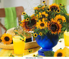 Vase Of Sunflowers Bunch Sunflowers In Glass Vase Stock Photos U0026 Bunch Sunflowers In