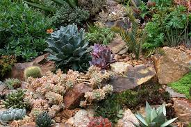 Rock Garden Succulents Rock Garden With Succulents In Bay Area Gardening Pinterest