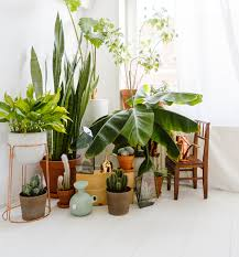 indoor plant display indoor plants for apartments apartment decorating ideas
