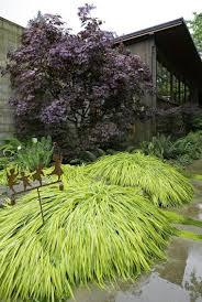 japanese garden ideas japanese garden ideas of japanese mountain grass home dezign