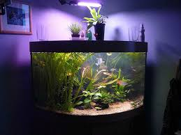 unique fish aquarium decor aquarium design ideas