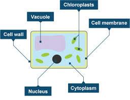 bbc gcse bitesize photosynthesis