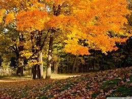 autumn halloween wallpaper fall scene hd desktop wallpaper high definition fullscreen