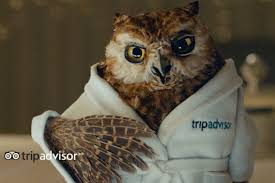 americas best owl commercial actress tripadvisor returns to tv advertising with bathrobe clad owl as