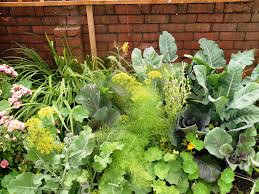 companion planting for beautiful weed free borders the groblog