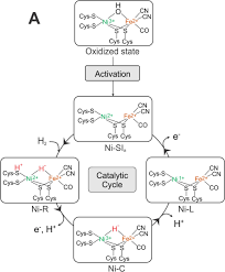 research biophysical chemistry mpi cec