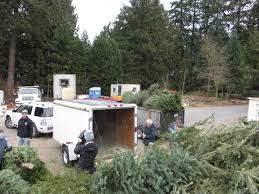 christmas tree pickup and recycling