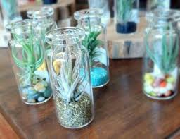 terrariums archives cactus jungle