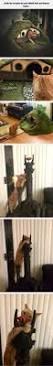 145 best best pet home setups images on pinterest dogs cat room