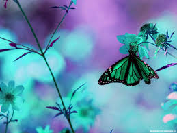 super awesome butterfly background u2013 minimalist backgrounds