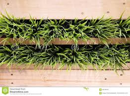 wooden wall with hang green artificial plants stock photo image
