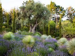 Mediterranean Gardens Ideas Mediterranean Garden Design