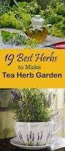 best 25 best herbs to grow ideas on pinterest growing herbs