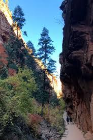 quotes zion national park campfire chic crafty micro adventurer u0026 chronic beginner
