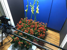 the most beautiful flower bloom time lapse you u0027ll probably ever