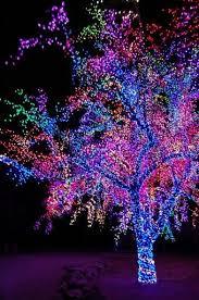 christmas lights tree wrap how to wrap a tree with lights small trees christmas lights and
