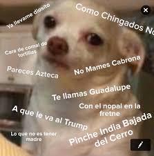 Speak Spanish Meme - shit mexicans do on twitter when a hispanic girl says she