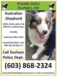 australian shepherd new hampshire university downtown home facebook