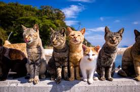 cat island best time to see aoshima cat island in japan 2018 rove me