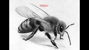 how to draw a bee how to draw a realistic bee youtube