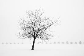 bare tree in winter wonderful black and white snow scenery