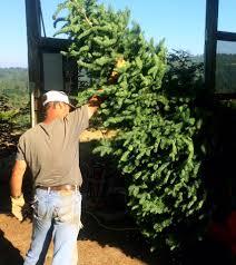 sleighbells farm u0026 gift shop home facebook