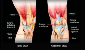 Anatomy Of Knee Injuries Knee Pain Specialists Sacramento Carmichaelsummit Orthopedic