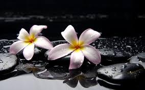 imagenes zen gratis zen relajar rocas piedras gotas de agua fondos de pantalla gratis