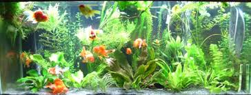 Best Substrate For Aquascaping Sand As A Superior Substrate Advanced Aquarium Concepts