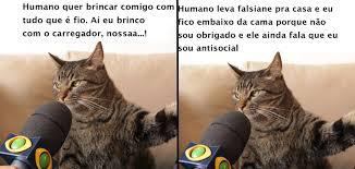 Gato Meme - 12 motivos que fazem do gato sendo entrevistado um dos melhores