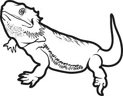 free printable lizard coloring kids 5
