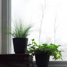 winter gardening indoors backyard ecosystem