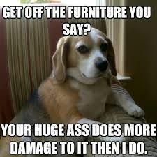 Crazy Ass Memes - 12 best crazy ass dogs images on pinterest funny animals funny