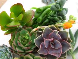 succelents succulent tips and care instructions build sow grow