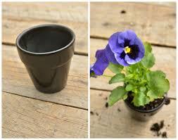 Flower Pot Wedding Favors - diy pansy favors intimate weddings small wedding blog diy
