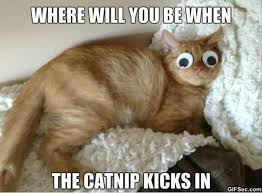 Caturday Meme - your week dose of caturday memes cute pinterest googly eyes