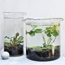 Container Water Garden Ideas 27 Indoor Water Garden Ideas Small Garden Ideas