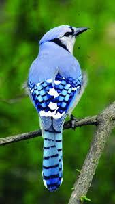 Audubon Backyard Bird Count by Join The Backyard Bird Count U2014 It U0027s Great Weavers Way Co Op