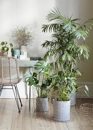 Zu Besuch Bei Igor Happy Interior Blog Contemporary 132 Best Urban Jungle Images On Pinterest Jungles Eat And Plants