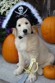 happy halloween funny picture best 25 dog pirate costume ideas on pinterest yoda dog costume