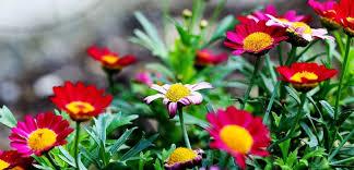 nice list of garden flowers contemporary garden and landscape