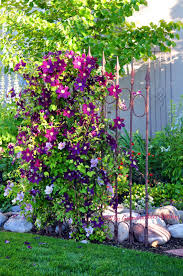 hide the downspout with a trellis hide your rain spout by