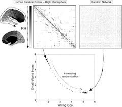 frontiers the non random brain efficiency economy and complex