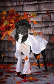 halloween city riverton utah 46 best pets and animals images on pinterest salt lake city