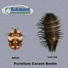 Harding Carpets by Furniture Carpet Beetle Centerfordemocracy Org