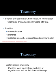 chapter 10 chemotaxonomy ppt bacteria taxonomy biology