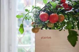 Indoor Vertical Gardens - plantus please modular indoor vertical gardens