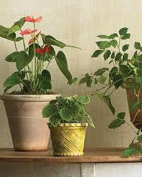 Houseplants Houseplants For Any Kind Of Light Martha Stewart
