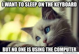 Keyboard Cat Meme - first world cat problems meme weknowmemes